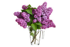 Bouquet of spring purple lilac Royalty Free Stock Photography