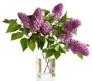 Bouquet of spring purple Lilac Royalty Free Stock Images