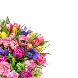 Bouquet spring tulip flowers isolated white background. Bouquet spring tulip flowers isolated on white background royalty free stock image