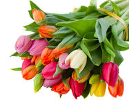 Bouquet of spring tulips Stock Photo