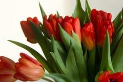 Spring bouquet of orange tulips stock photography
