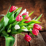 Bouquet of Spring Tulips, square Stock Photography
