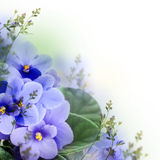 Bouquet of spring violets Royalty Free Stock Photos