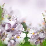 Bouquet of spring violets Stock Photo