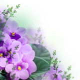 Bouquet of spring violets Royalty Free Stock Photo