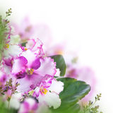 Bouquet of spring violets Stock Image