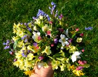 Bouquet of spring wildflowers royalty free stock photo