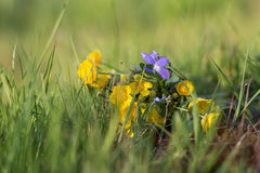 Bouquet of spring wildflowers on the grass Stock Photography