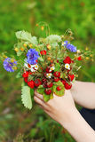 Bouquet of strawberries Royalty Free Stock Images