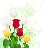 Bouquet of stylized tulips. Artistically painted a bouquet of seven tulips, red, yellow and white, decorated with ornamental plants and a drop of green paint Stock Image