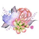 Bouquet succulent Photo stock