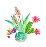 Bouquet of succulents. Beatiful succulent composition: aloe, aeonium and cactus. Watercolor illustrations of green garden plants blossoming. Trendy succulent Royalty Free Stock Photos