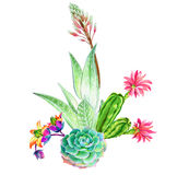 Bouquet of succulents. Beatiful succulent composition: aloe, aeonium and cactus. Watercolor illustrations of green garden plants blossoming. Trendy succulent Royalty Free Stock Images