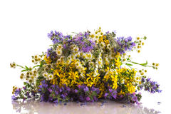 Bouquet of summer flowers Royalty Free Stock Photos