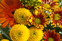 Bouquet of summer flowers, close-up Royalty Free Stock Photography