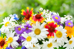 Bouquet of summer flowers on green background Royalty Free Stock Images
