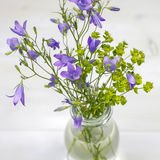 Bouquet of summer fresh flowers campanula in glass vase Royalty Free Stock Image