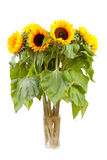 Bouquet of sunflowers Royalty Free Stock Photos