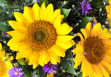 Bouquet with sunflowers Royalty Free Stock Photos