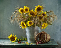 Bouquet of sunflowers and cherry Stock Images
