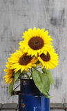 Bouquet of sunflowers, copy space Stock Image