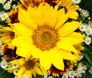 Bouquet of sunflowers and daisies Royalty Free Stock Images
