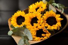 Bouquet of sunflowers on dark background. Deluxe bouquet of sunflowers on dark background Stock Image