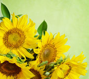 Bouquet of sunflowers royalty free stock image