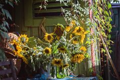 Bouquet of sunflowers near the hut royalty free stock image