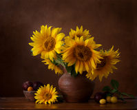 Bouquet of sunflowers in old clay jug. Stock Image