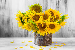 Bouquet sunflowers Still life old tin Stock Images
