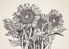 Bouquet of sunflowers. `The sun in miniature` - so often called Sunflower. This amazing plant adored by many great artists. Not surprisingly, Sunflower - Sun Royalty Free Stock Photos