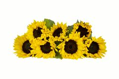 Bouquet of sunflowers on a white background Stock Photo