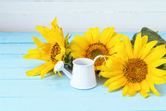 Bouquet of sunflowers and white watering can on a blue wooden ba Stock Photos