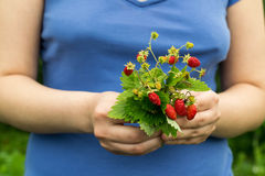 Bouquet of sweet ripe strawberry in the hands of a girl Royalty Free Stock Images