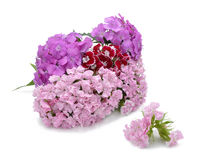 Bouquet from sweet-williams Stock Photography