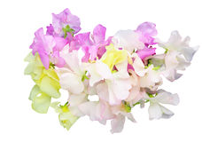 Bouquet of sweetpea Stock Photography