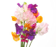 Bouquet of sweetpea Royalty Free Stock Image