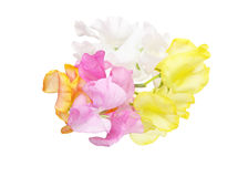 Bouquet of sweetpea. Pictured a bouquet of sweetpea  in a white background Stock Photos