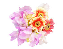 Bouquet of sweetpea and Transvaal daisy Stock Images