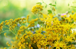 Bouquet with tansy Royalty Free Stock Photography
