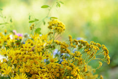 Bouquet with tansy Royalty Free Stock Images