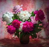 Bouquet of ten bright burgundy, tender pink and white peonies in royalty free stock images