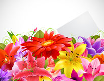 Bouquet of tender flowers Stock Images