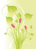 Bouquet in tender green. Vector bouquet of spring flowers Stock Photos