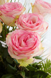 Bouquet of tender pink roses royalty free stock photography