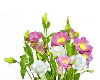Bouquet of tender pink with yellow and white Eustoma Lisianthus. Flowers on a white background isolated Royalty Free Stock Photography