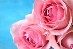 Bouquet of three pink roses Stock Photos