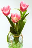 Bouquet of three pink tulips in green crystal vase Stock Image