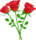 Bouquet of three red rose. Vector illustration Stock Photography